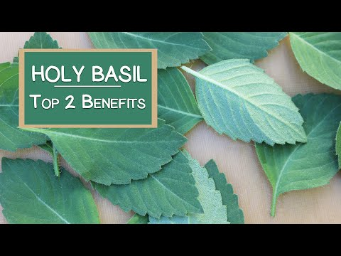 Top 2 Benefits of Holy Basil, A Sattvic Herbal Rasayana