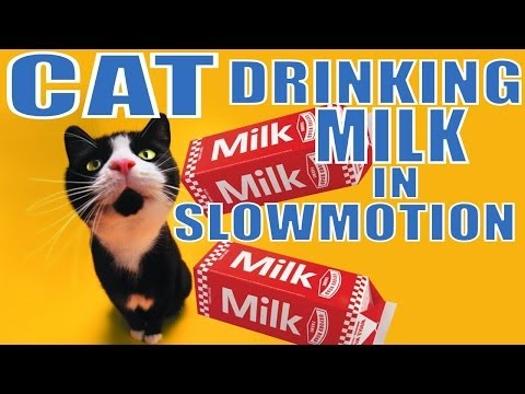 Download Youtube: Cat Drinking MILK in SUPER Slow Motion 2000 FPS