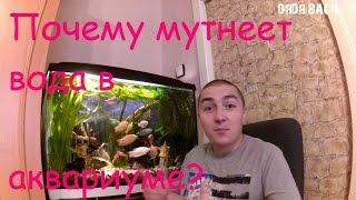 Мутная вода в аквариуме. Почему мутнеет вода в аквариуме?