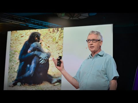 Video image: The surprising science of alpha males - Frans de Waal