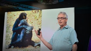 The surprising science of alpha males | Frans de Waal thumbnail