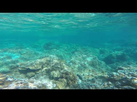 Hawaii: snorkeling on Kauai