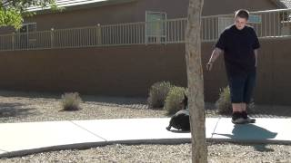 Dog Training Tips In Phoenix Arizona - On Leash Obedience - Greta - European - Doberman Pinscher