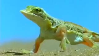 Дикая природа  Африка  Пустыня Намиб