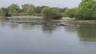 タンザニアの南部「セルース動物保護区」のサファリにて。ルフィジ川の...