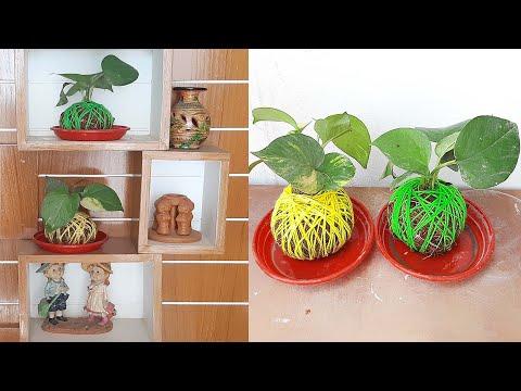 Creative Ideas for Money Plant Decoration /Gardening Ideas /New Way to Grow Money Plant#Shorts