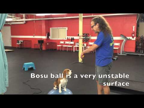Dog Confidence Building, Agility Equipment, DIY Dog Training