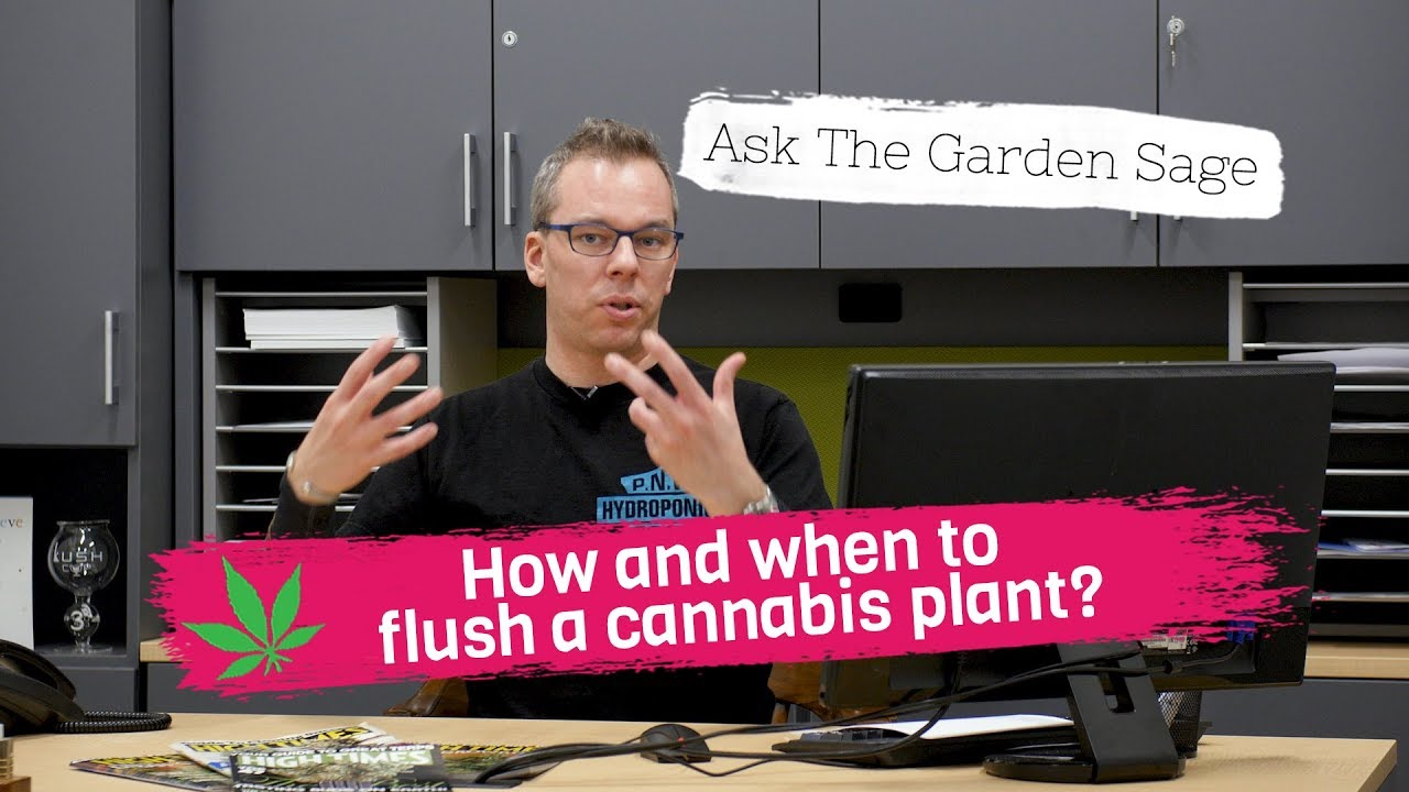 How and when to flush a cannabis plant? - Ask the Garden Sage
