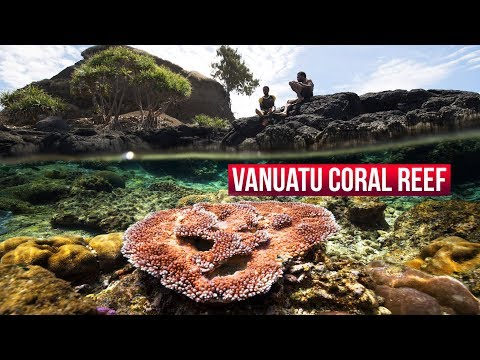 Vanuatu coral reef sanctuary - #ClimateCompassion