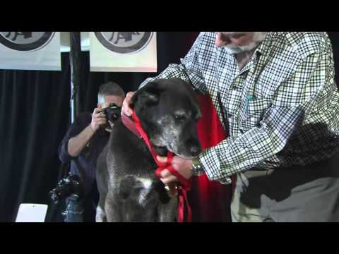Courageous pets honoured in Purina Hall of Fame