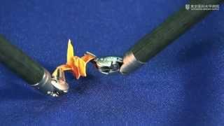 【手術支援ロボット「ダヴィンチ」】 トレーニング(折り鶴)
