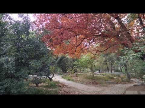 Bei Da in the fall (PEKING UNIVERSITY) (BEIJING UNIVERSITY)
