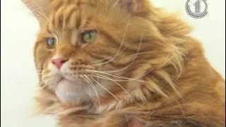Выставка котиков в Гомеле
