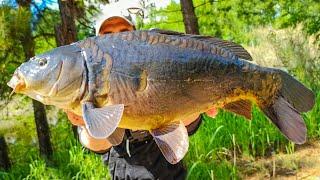 ЛИНЬ КАРП ЛИНЬ КАРП Вот это рыбалка на удочку Ловля линя Ловля карпа Рыбалка на линя