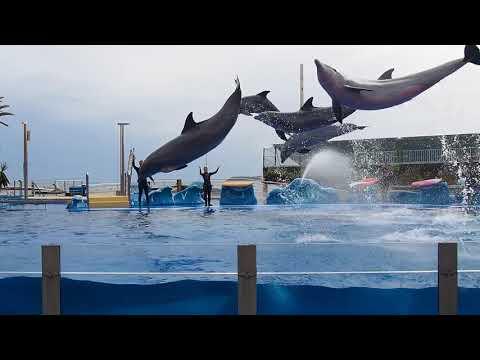 Marineland Dolphin Show (Mallorca)