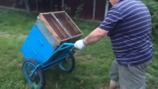Погрузка пчёл. Зарядка... Физическая)