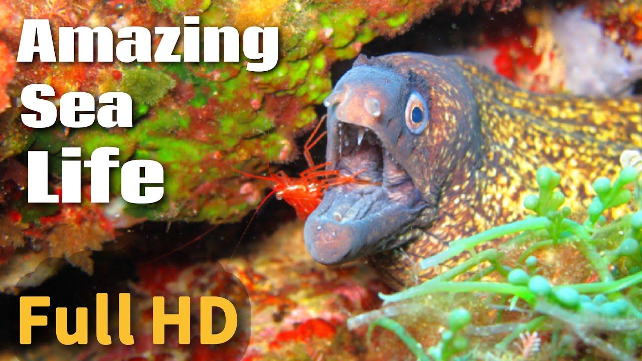 Amazing Sea Life In Full HD   4K TV   8K Retina
