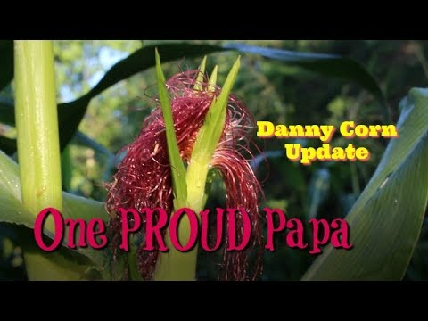 Danny Corn Update  One PROUD Papa