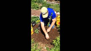 How To Plant A Tree In Missouri (arbor Day 2015)