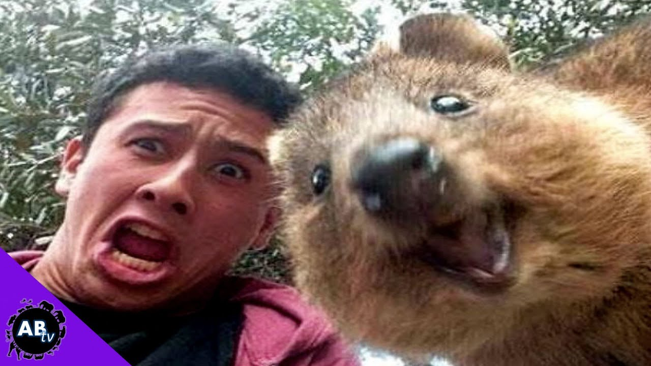 Funny animals of the week - 13 May 2016 (40 pics ...  |Weird Cute Animals