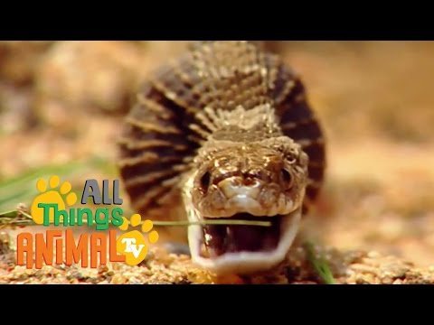 Thumbnail: SNAKES | Animals for children. Kids videos. Kindergarten. Preschool learning
