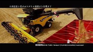 【でっかいどう】農機ってカッコイイ!ギネス級コンバインで小麦収穫