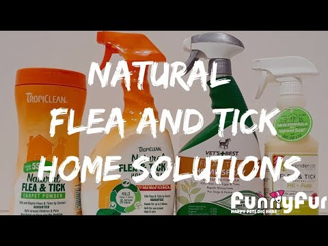 Natural Flea And Tick Home Solutions