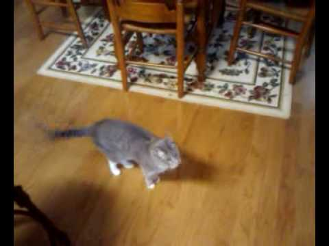 Teaching Tillie Cat to Count – Trick for Treats
