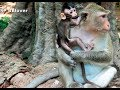 Baby Cry Cos Monkey Carbzilla Catching Him, She want him Be Her Son - BBlover 62