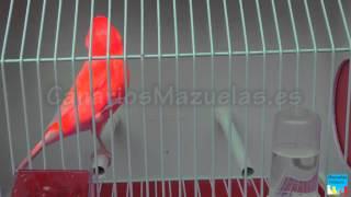 الوان العصافير