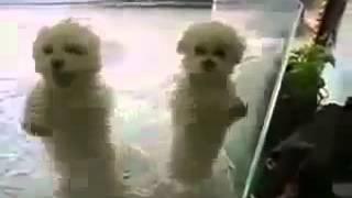 Прикольные собаки Подборка Танцующих Собак Смотри прикол!
