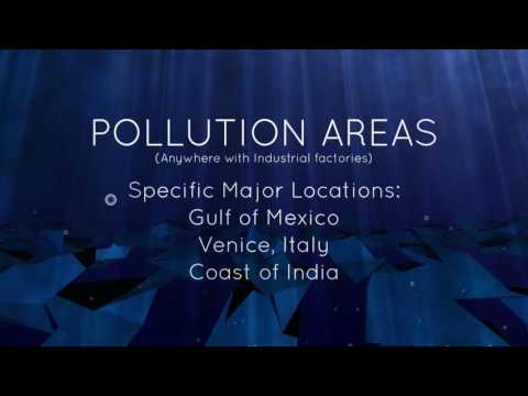 Thermal Pollution - An Animation Project - Aquatic Science