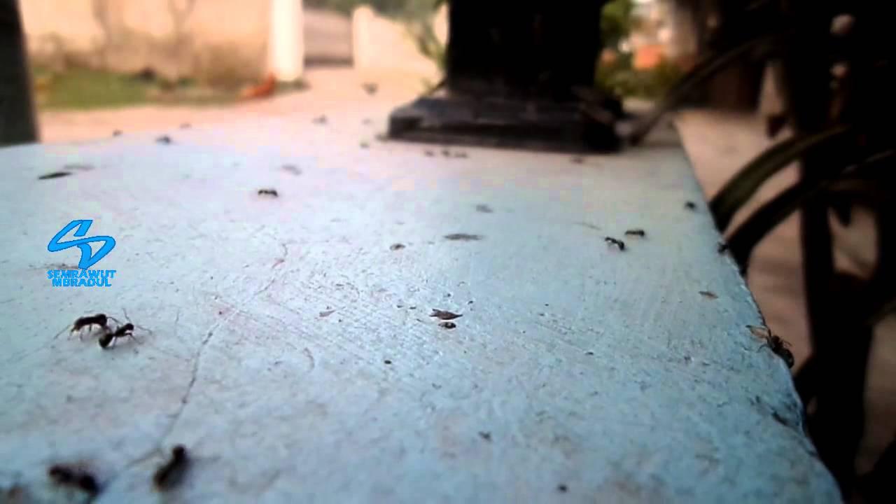 Fogging Effect for Ants - YouTube