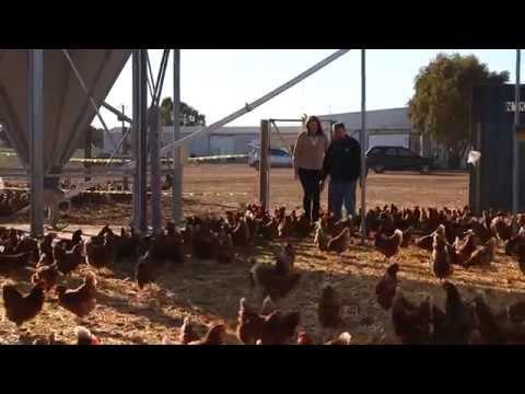 Australian Egg Farmer Profile: Dion Andary
