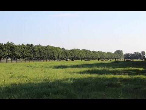 Venez visiter la ferme Saint-Vincent biologique !