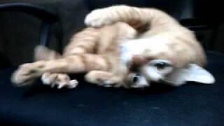 貓貓霸住電腦椅 Thumbnail
