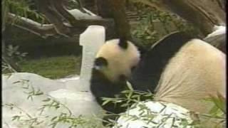 Mei Sheng - 1st Birthday