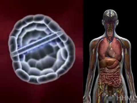 HHMI's Stem Cells - Understanding Embryonic Stem Cells
