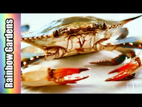 How to Collect Crab Roe and Clean Blue Crabs