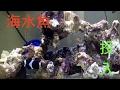 【海水魚】 水慣らしから海水魚投入まで の動画、YouTube動画。