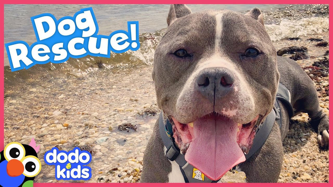 Hurt Dog Walks Again Thanks To Hero And Some Peanut Butter   Animal Videos for Kids   Dodo Kids