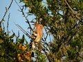 Huppes fasciées et autres oiseaux de Malras