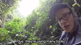 Na tropie goryli górskich | Flying Polack