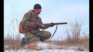 Охота на зайца. Выпал первый снег. Зайца много в этом сезоне.