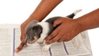 Puppy Obedience School