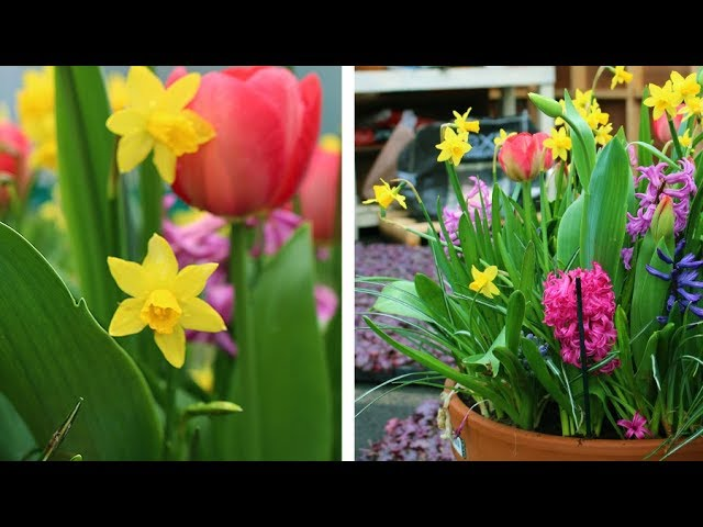 How To Layer Spring Flowering Bulbs Lasagna Planting Spring Garden Guide Youtube