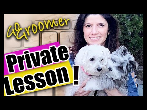 LIVE PRIVATE LessonDog Grooming Student in TRAINING!