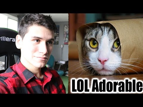 Cats Are So Funny You Will Die Laughing - Funny Cat Compilation Reaction