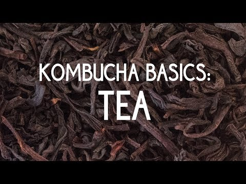 Kombucha Basics: Tea
