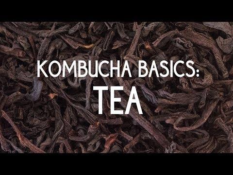 Kombucha Basics: Tea